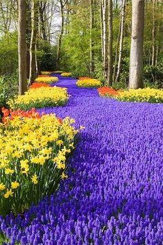 Whimsical Raindrop Cottage, flowersgardenlove: Keukenhof, Holland, Flowers...