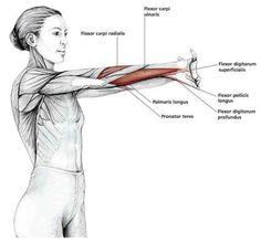 this is a great stretch for anyone using their hands and forearms a lot.