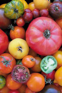 Weird heritage tomatoes (Tomato Ten Colour Heirloom Mix)
