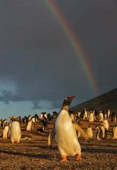 rainbows : brightening up January 2014