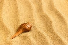 Sea shell lying on the pure golden sand. Huge Muscle Men, The Pure, Sometimes I Wonder, Watercolor Background, Sea Shells, Waves, Ocean, Stock Photos, Pure Products