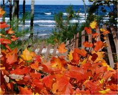 Photos, pics, pictures, images of Autumn Fall Color in the Upper Peninsula of Michigan (backyard_beach_fence_1)
