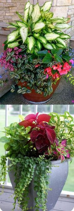 How to create beautiful shade garden pots using easy to grow plants with showy foliage and flowers. And plant lists for all 16 container planting designs! - A Piece Of Rainbow