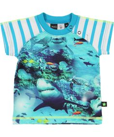 Molo Great Summer T-shirt with Hungry Sharks. molo.en.emilea.be