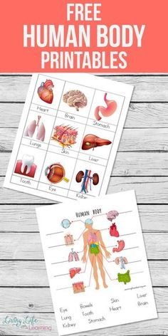 My son loves learning about the human body so I created these human body printables for kids to introduce him to the major organs in the body. A fun overview of the entire human body, have you tried it with your kids? Body Preschool, Preschool Science, Science For Kids, Science Activities, Science And Nature, Activities For Kids, Science Biology, Science Ideas, Science Crafts