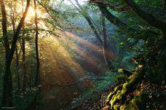 "European Jungle - <a href=""http://instagram.com/kilianschoenberger/"">@kilianschoenberger I N S T A G R A M</a>  <a href=""https://www.facebook.com/pages/Landscape-Photography-by-Kilian-Schoenberger/304631876263547"">L A N D S C A P E   P H O T O G R A P H Y facebook</a>"