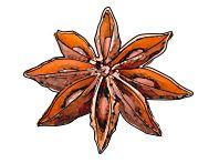Anyż gwiazdkowy - owoce o charakterystycznym kształcie gwiazdki, mające intensywny słodkawy zapach, służące jako przyprawa, zwłaszcza do ciast, kompotów, deserów. Także naturalny aromat likierów alkoholowych. Anyż pochodzi z Chin, obecnie uprawiany jest także w Japonii.