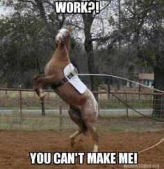 10 Memes That Show How Your Horse Feels About Spring! Click on the picture to see them!!! Sooo funny!!