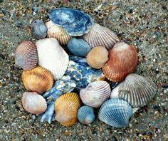 Tybee palette ~ Atlantic neutrals