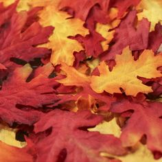 Assorted Artificial Fall Oak Leaves