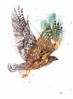 Official Rachel Walker limited edition prints of colourful, splashy, watercolour and ink creatures. Falke Tattoo, Rachel Walker, Nz Art, Bird Artwork, Illustration, Wildlife Art, Limited Edition Prints, Watercolor And Ink, Cool Art