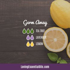 Top 12 Antibacterial Essential Oils – Beauty and The Beast Antibacterial Essential Oils, Helichrysum Essential Oil, Aromatherapy Oils, Purification Essential Oil, Essential Oils Guide, Doterra Essential Oils, Immunity Essential Oils, Essential Oil Storage, Yl Oils