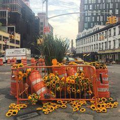 Caution! Sunflowers ahead! 🚧 #LMDxNYC 🐞. #flowersfornewyork #lmdwashere #meatpackingdistrict #sunflowers #stripes #constructionorange #flowerflash