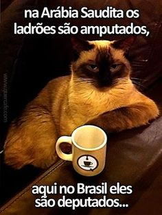 Engraçado e art digital - Digital Art Sarcastic Quotes, Funny Quotes, Funny Sarcastic, Cat Drinking, Drinking Coffee, Funny Images, Laugh Out Loud, Hilarious, Messages