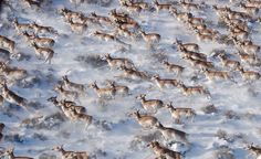 animal-migration-photos- (21)