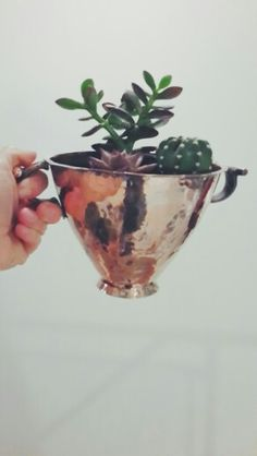 copper and succulents