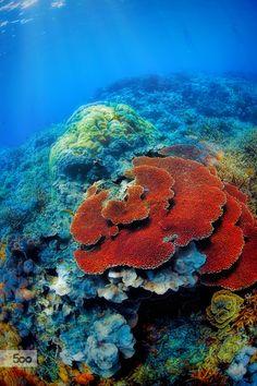 Underwater Landscape Coralreef Nature Sea