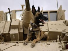 US Air Force Military Working Dog Sits on a US Army M2A3 Bradley Fighting Vehicle, via All Posters co.jp