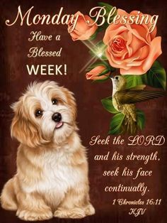 #PL1324 Aug 10 2020 #PuppyLove #Monday #Blessing #1Chronicles16v11 KJV Have A Blessed Week, 1 Chronicles 16, Monday Blessings, Seek The Lord, Thing 1, Pet Names, Facebook Sign Up, Puppy Love, Good Morning