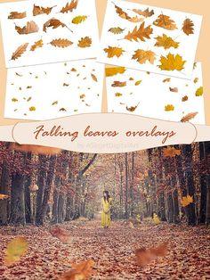 Autumn overlays leaf overlay falling leaves overlays photo