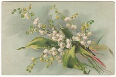 BEAUTIFUL LILY OF THE VALLEY BY KLEIN Original Vintage Art Postcard