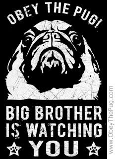 pugs rule, other dogs drool...This is for my great friends Cinday and Susan.