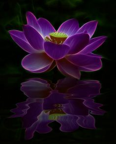 ~~ Joie de Vivre, Moon Light Reflections at Midnight, a glowing Lotus flower, one single petal touches the water ... ~~