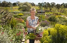 Discover what a garden designer's property looks like this spring when The Weekender Herald columnist and Gardening Australia presenter Sophie Thomson opens up her garden to the public. Photo: Sophie collects a basket of fresh produce from her veggie patch at her Mount Barker Springs home. Photo by John Hemmings. http://adelaidehills.realviewtechnologies.com/