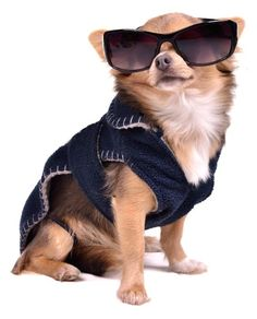 Clothes For Chihuahuas Uk Cheap