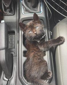 "Maddie | LilMissJeepHer on Instagram: ""Everyone meet Asher the Jeep Kitten🖤"" Jeep Trails, Cool Jeeps, New Adventures, Kitten, Meet, Cats, Animals, Instagram, Cute Kittens"