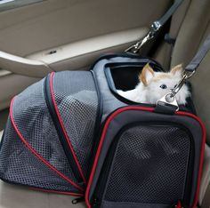 Cheap pet dog carrier, Buy Quality dog carrier bag directly from China dog carrier Suppliers: Portable Storage Pet Dog Carrier Bags Dog Cat Puppy Pet Travel Tote Shoulder Bag Cage Crate Gray Black Car Cat, Teacup Cats, Pet Carrier Bag, Dog Cages, Pet Travel, Chihuahua, Pet Dogs, Pet Products, 10 Pm