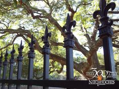 The Fleur de Lis represents the French heritage in Natchitoches, the oldest City in Louisiana.