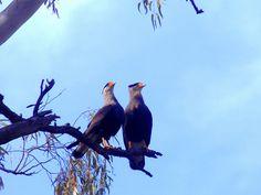 Capilla Buffo Guaida 022 | por BATS Busqueda Argentina por un Turismo Sustentable