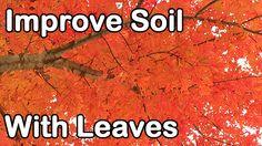 Improve Soil Fertility with Leaves: Leaf Mold, Leaf Mulch, Leaf Compost