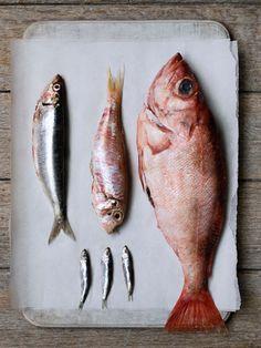 dal più grande al più piccolo  Ristorante di pesce La Passera di Mare_www.passeradimare.it