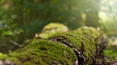 Nachmittag im Wald