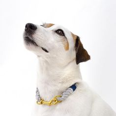Beautiful Lasso Model Kailua showing the Lasso Stella collar. High quality rope collar.