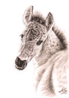 Wildpferd Fohlen - Fine Art Print A3 Pferde Zeichnung by Nicole Zeug, www.arts-and-horses.de