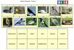 Mini Loco Vogels Herkennen