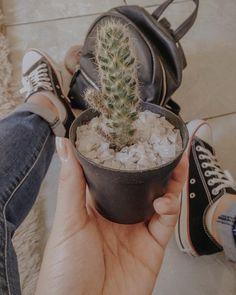 Cactus Photography, Tumblr Photography, Photography Branding, Plant Aesthetic, Aesthetic Art, Insta Photo Ideas, Succulent Terrarium, Foto Pose, Summer Pictures