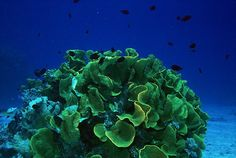 Stunning images from the Great Barrier Reef - a perfect time of year to visit and why not combine it with a few nights land based at the amazing Crystalbrook Lodge - we can arrange everything for you.  https://www.facebook.com/crystalbrookcollection?fref=photo