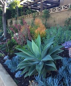 How To Use Succulent Landscape Design For Your Home Succulent Garden Landscape, Garden Landscape Design, Plants, Low Water Gardening, Tropical Garden Design, Drought Tolerant Garden, Rock Garden Landscaping, Australian Garden, Landscaping Plants