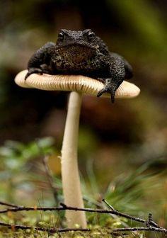 big frog sitting on a mushroom