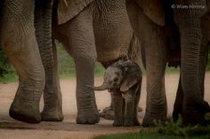 Baby elephant @ Addo