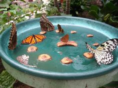 DIY: Butterfly feeder- who doesn't want to attract butterflies to their backyard?