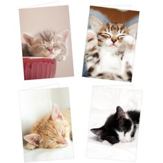 Cats Protection Cute Kitten Notecards