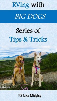RVing with BIG DOGS series of tips & tricks rv living, rv full time, rv full-time, tips, with pets, with dogs, ideas, tips, organization, travel trailers, fifth wheels, motorhomes, rv homes