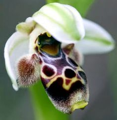 BEE Amazing Orchids