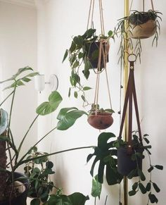 Inspiring 98+ Easy Houseplants For Indoor Plants https://decoratoo.com/2017/07/23/98-easy-houseplants-indoor-plants/ Below you can observe both of these plants one year later. The plants are usually easy to take care of, making them a great option for even the least-experienced gardener.