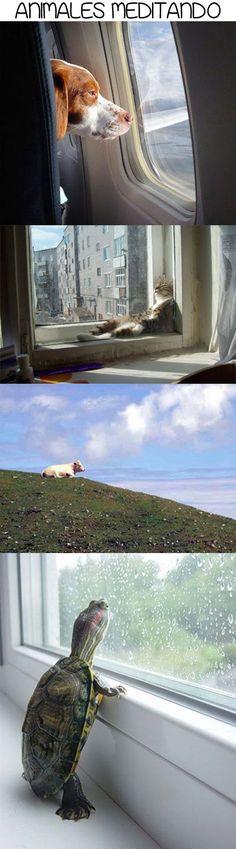 Animales meditando.